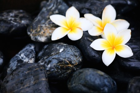 Frangipani flowers and stones in SPA photo