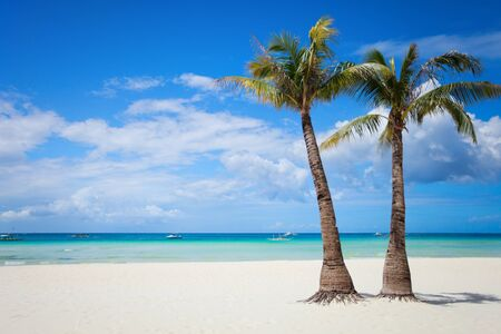 palm: Perfect tropical white sand beach with palm trees