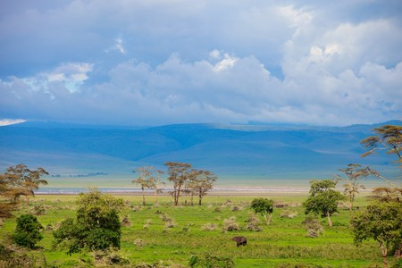 Landscape of Ngorongoro crater area in Tanzania. Elephants and flamingos can be found on this photo. Фото со стока