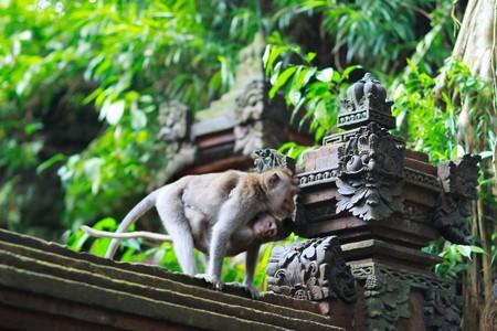 ubud: Details of temple covered with moss, Ubud monkey forest Bali, running monkey motion blurred