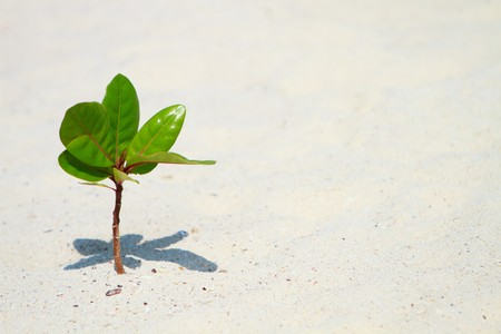 Young green plant growing on white sand beach photo
