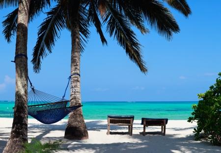 Perfect tropical beach of Zanzibar island with palm trees, sunbeds and hammock photo