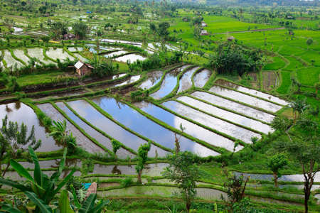 Landscape of beautiful rice field full of water at Central Bali photo