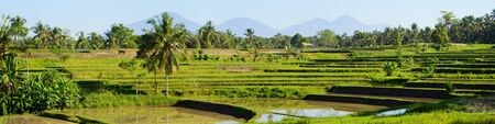 Panorama of beautiful rice field full of water at Central Bali photo