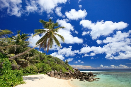 Perfect beach in Seychelles with white sand, turquoise waters, palm trees and blue sky photo