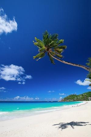 palmtree: Perfect white sand beach on Mahe island in Seychelles