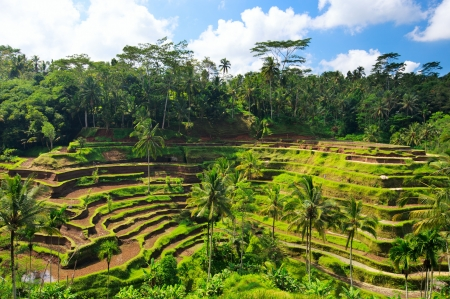 Panorama of beautiful rice terraces at Central Bali photo