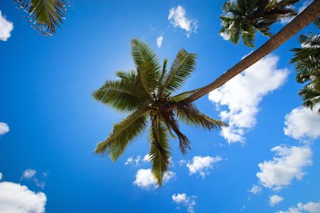 Tropical palm trees with coconuts over sky background photo