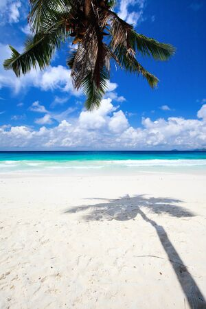 Palm tree shadow on tropical white sand beach Stock Photo - 8703918