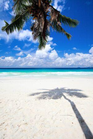 Palm tree shadow on tropical white sand beach Stock Photo - 8703918
