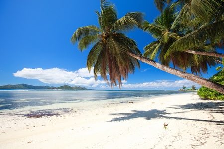 Perfect beach in Seychelles with white sand, turquoise waters, palm trees and blue sky Stock Photo - 8704034