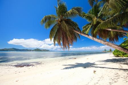 Perfekte Strand auf den Seychellen mit weißen Sand, türkisblauen Wasser, Palmen und blauer Himmel
