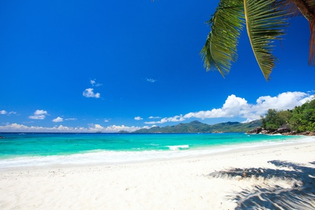 Perfect beach in Seychelles with white sand, turquoise waters, palm trees and blue sky Stock Photo - 8704012