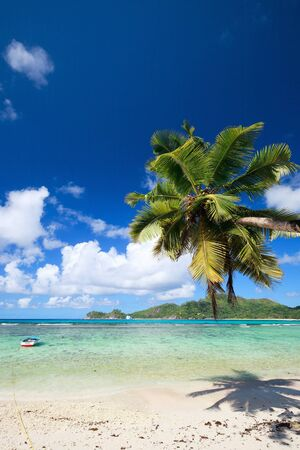 Perfect tropical beach with palm tree hanging over white sand and turquoise waters photo