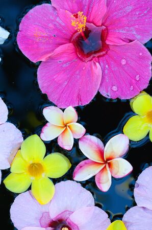 Variety of tropical flowers floating in water photo