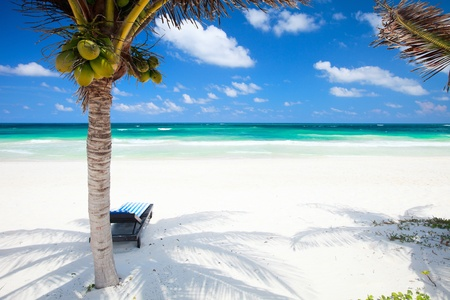 unspoilt: Coconut palms at perfect Caribbean beach in Tulum Mexico