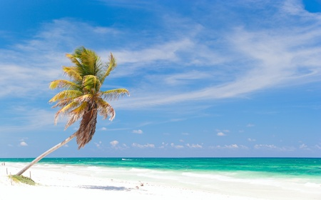 seasides: Coconut palm at perfect Caribbean beach in Tulum Mexico
