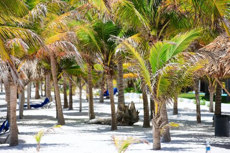 unspoilt: Palm trees at tropical coast in Akumal beach in Mexico Stock Photo