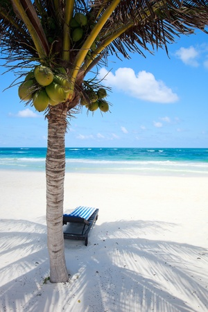 unspoilt: Coconut palm at perfect Caribbean beach in Tulum Mexico