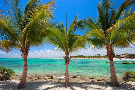 Palm trees at Akumal beach in Mexico photo