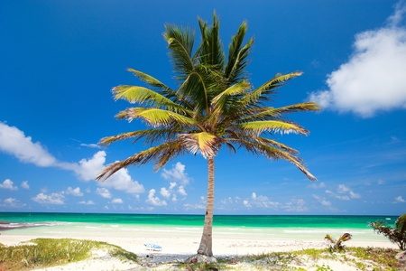tulum: Coconut palm at perfect Caribbean beach in Tulum Mexico