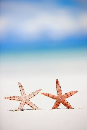 Two starfish on white sand tropical beach photo