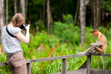 sandakan: Female photographer and proboscis monkey on Borneo island in Malaysia