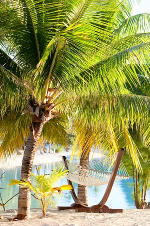 Hammock and palm trees on tropical beach photo