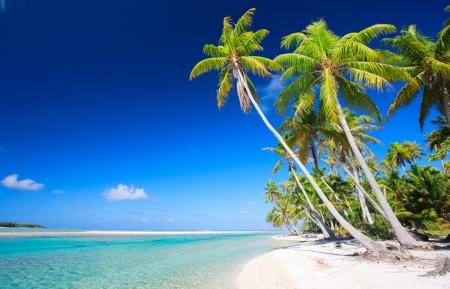 palmtree: Stunning beach at Tikehau atoll in French Polynesia Stock Photo