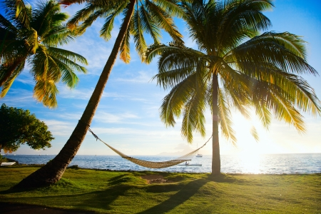 Hammock silhouette with palm trees on a beautiful beach at sunset photo