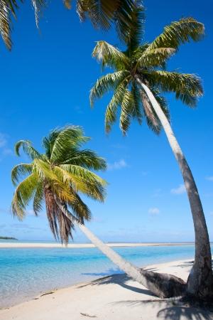Palm trees on stunning beach at Tikehau atoll in French Polynesia