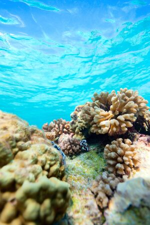 french polynesia: Beautiful colorful coral reef in Pacific ocean Stock Photo