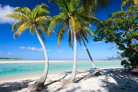french polynesia: Stunning beach at Tikehau atoll in French Polynesia Stock Photo
