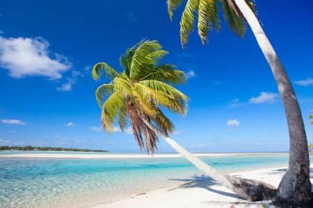 Beautiful beach at Tikehau atoll in French Polynesia photo