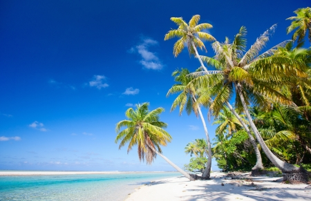 Beautiful beach at Tikehau atoll in French Polynesia Stock Photo - 16318696