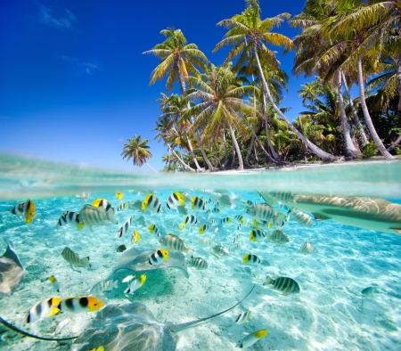 exotic fish: Beautiful tropical island above and underwater