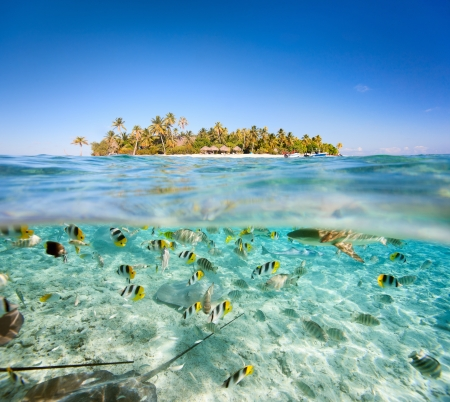 island paradise: Beautiful tropical island above and underwater