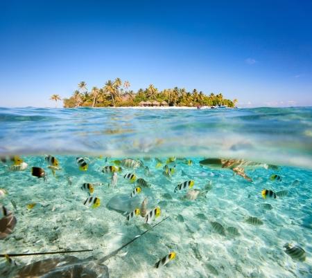 Schöne tropische Insel über und unter Wasser Standard-Bild - 16440897