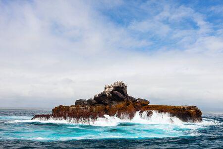 galapagos: Rock with sea birds off the coast of Galapagos Isabela island, Ecuador