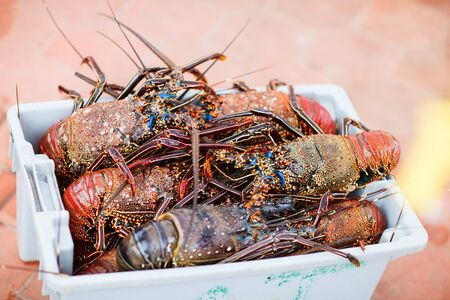 Many lobsters for sale at seafood market photo
