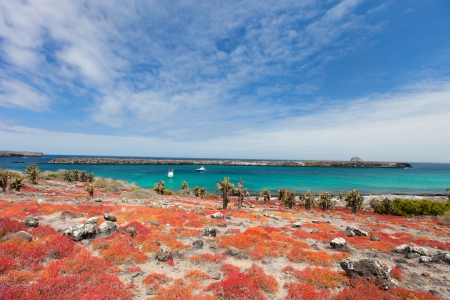 Beautiful landscape of Galapagos South Plaza island photo