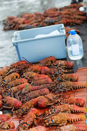 langouste: Many lobsters for sale at seafood market