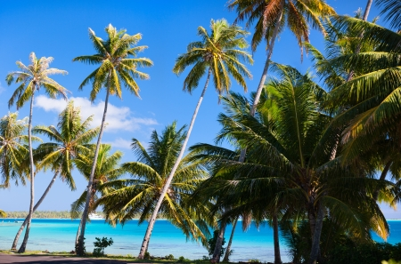Beautiful coast on Bora Bora island photo