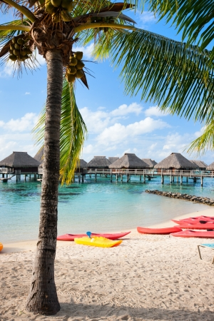 polynesia: Beautiful beach on Moorea island in French Polynesia