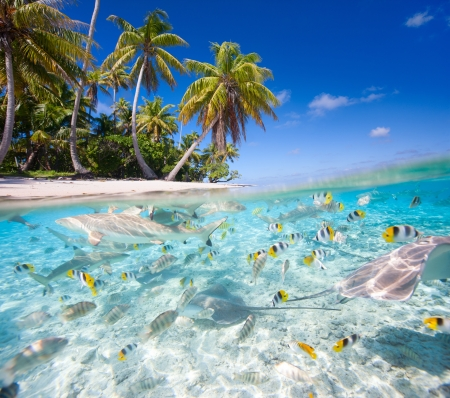 french polynesia: Beautiful tropical island in French Polynesia under and above water