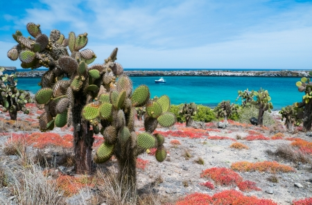 south pacific: Beautiful landscape of Galapagos South Plaza island