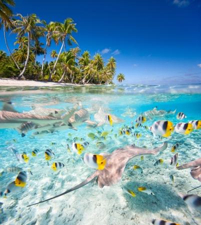 Belle ?le tropicale en Polyn?sie fran?aise sous et au-dessus de l'eau Banque d'images