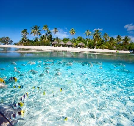 Sch?tropische Insel in Franz?ch-Polynesien unter und ? Wasser