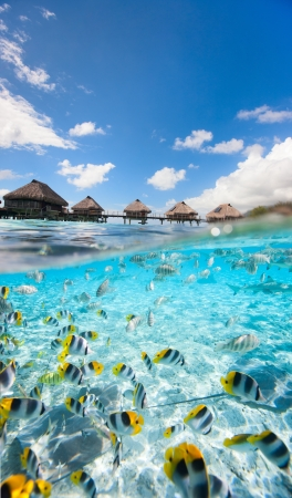 Tropical fish swimming under over the water bungalows in  French Polynesia Stock Photo