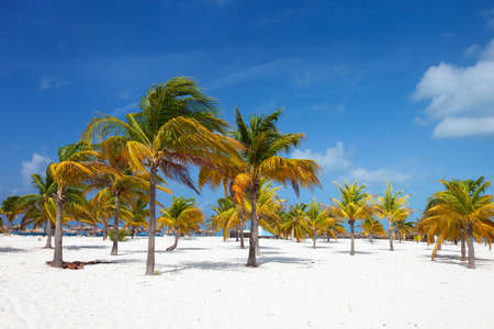unspoilt: Palm trees at a tropical Caribbean beach Stock Photo